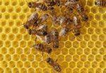 Come utilizzare la cera d'api per il corpo…