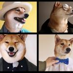 Bodhi: un cane modello da migliaia di dollari al mese!