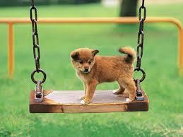 La scienza dice… chi ha un cane è più felice!