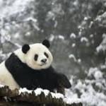 WWF: le emoticon per aiutare gli animali