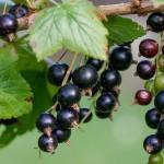 Dolori da freddo, reumatismi e artrite? Ecco 4 piante che ci aiutano!