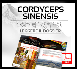 dossier-cordyceps-it