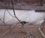 Nuovo arrivo allo Zoo di Daniele: il passero del Giappone