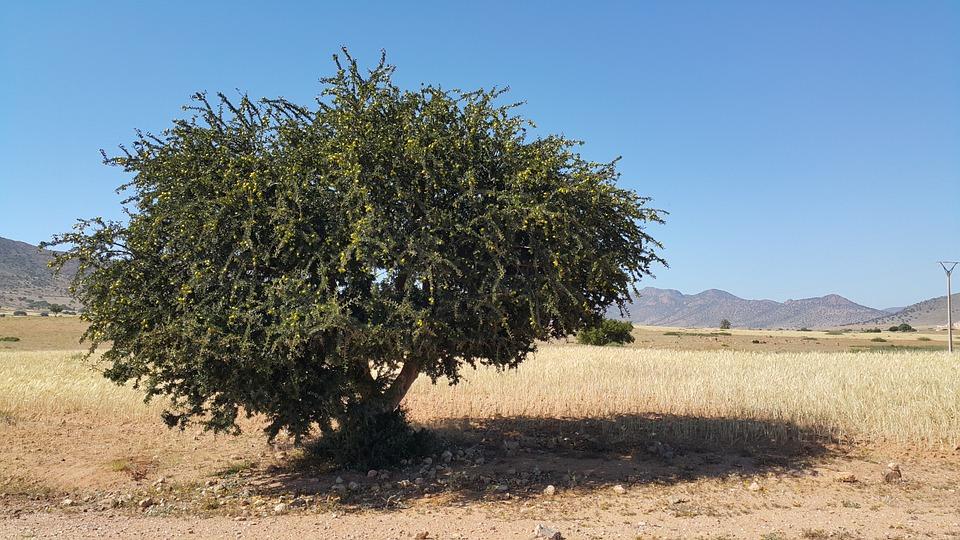 morocco-827830_960_720