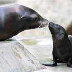 Alla scoperta della foca!
