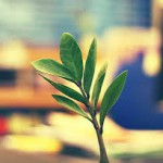 Sapevi che le piante aiutano ad aumentare la produttività?