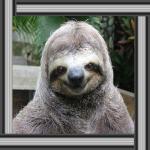 Chi detiene un record di pigrizia tra gli animali? Il bradipo!
