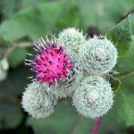 Quali sono le migliori erbe anticellulite?