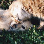 I consigli per proteggere cani e gatti in estate