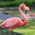 Il fenicottero rosa: una tendenza, ma anche un fantastico essere vivente!!