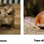 Alla scoperta del topolino
