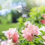 5 consigli per un giardino perfetto!