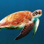 Riscaldamento globale: nel Mediterraneo sono a rischio il 50% delle specie