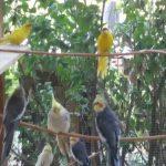 Esperienze personali: le convivenze dei pappagalli dello #ZoodiDaniele