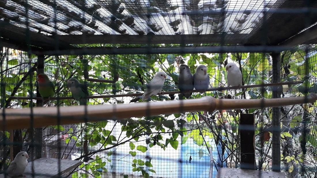 convivenze pappagalli