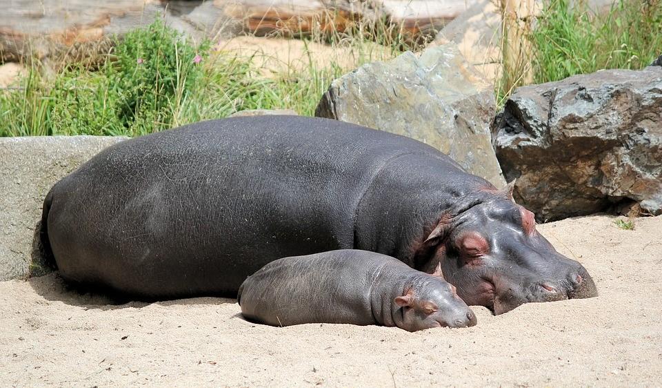 Zoo velocità dating