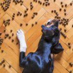 Cibo per cani: una piccola guida per i neo-padroni